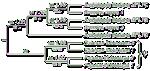 TreeGraph icon